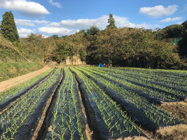 猪名川町の自然を活かした療育プログラムが強み