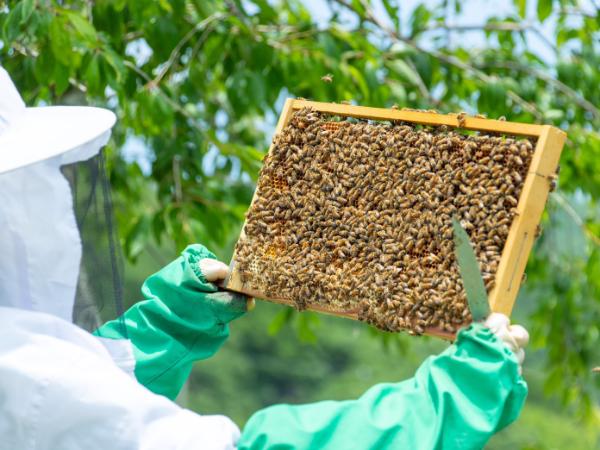 養蜂など自然を生かしたビジネスを展開。新たな事業のネタも盛り沢山!